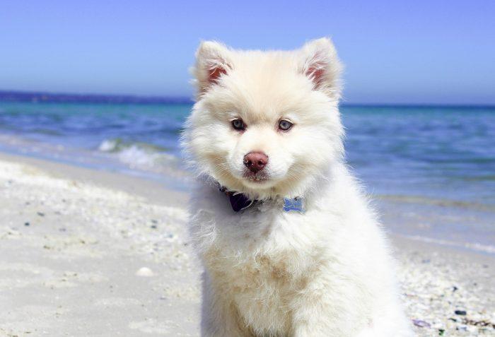 Vit hund på strand